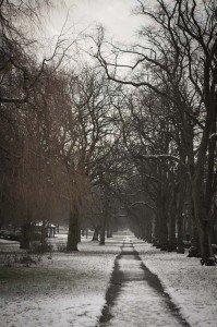 Preston_oor_park_snow_si_miller_photography01