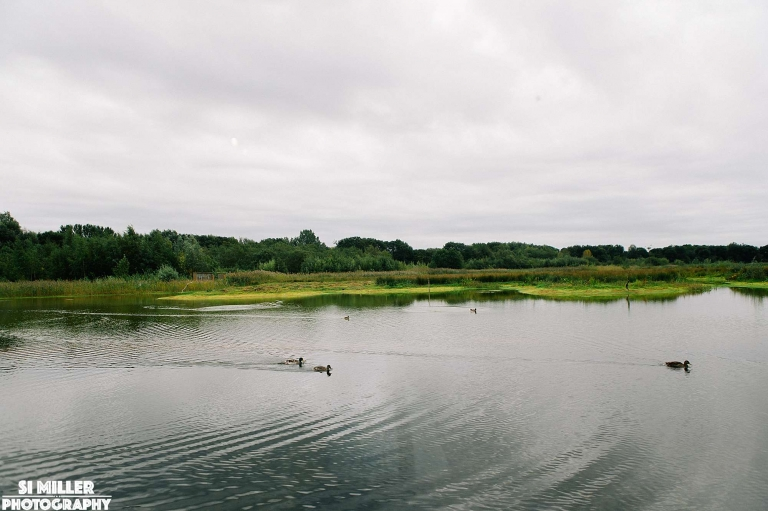 Ducks swimming on lake at brockholes