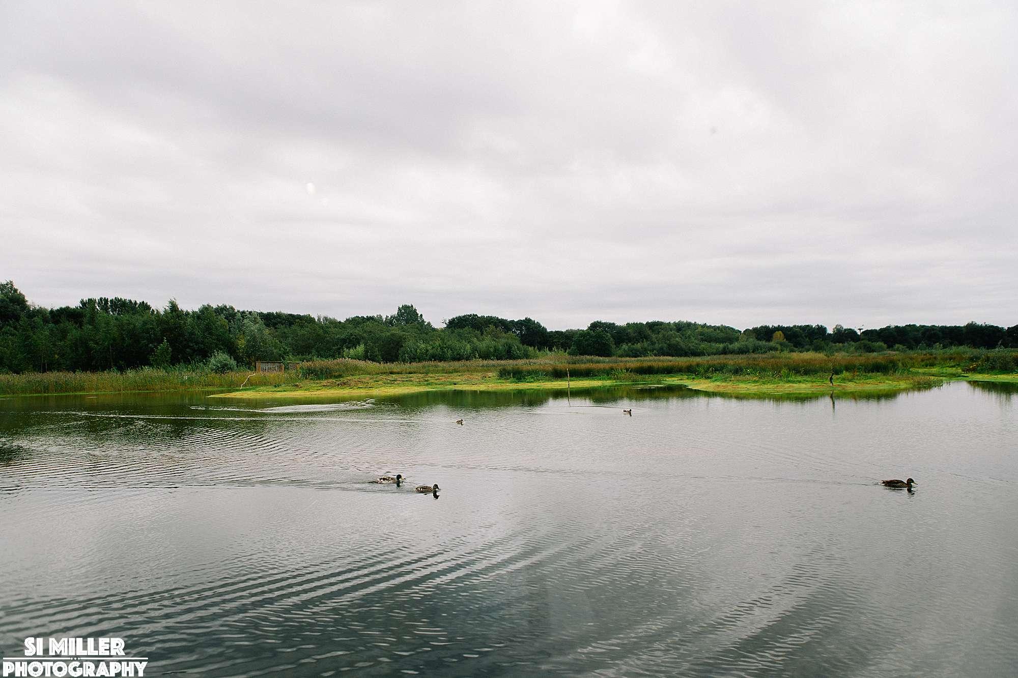 Ducks swimming on lake at brockholes