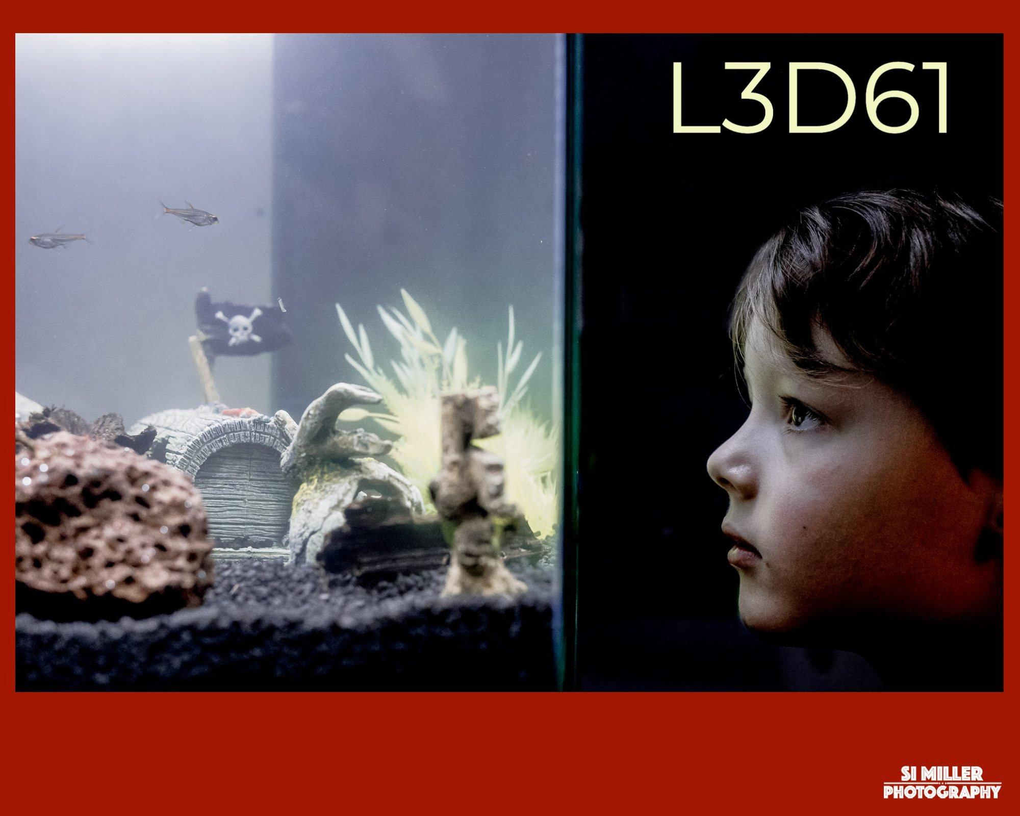 boy looking at fish in fish tank